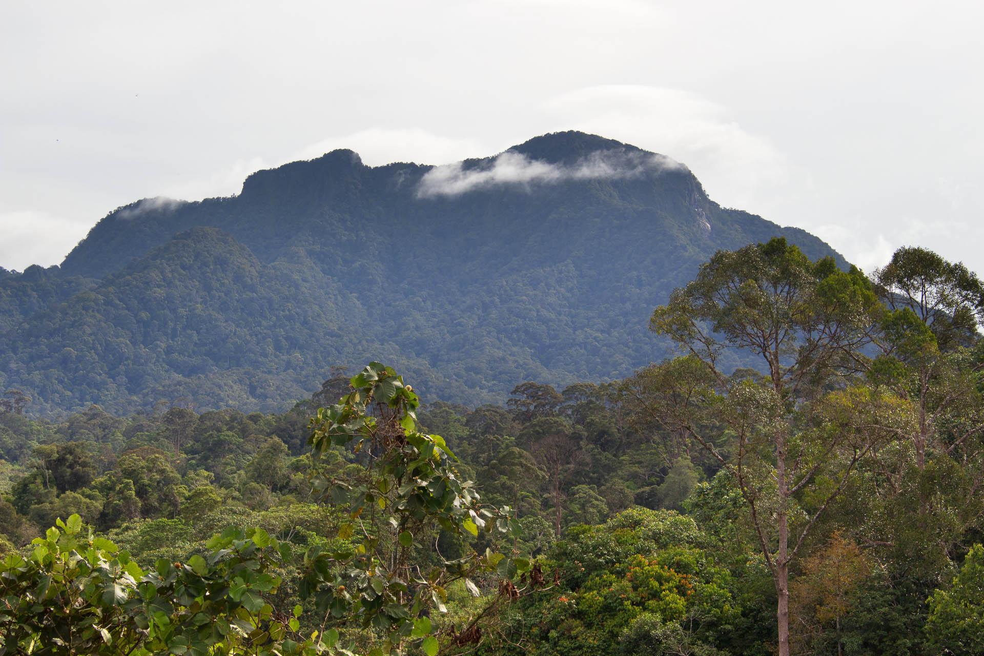 Gunung Bondang BioCultural Survey
